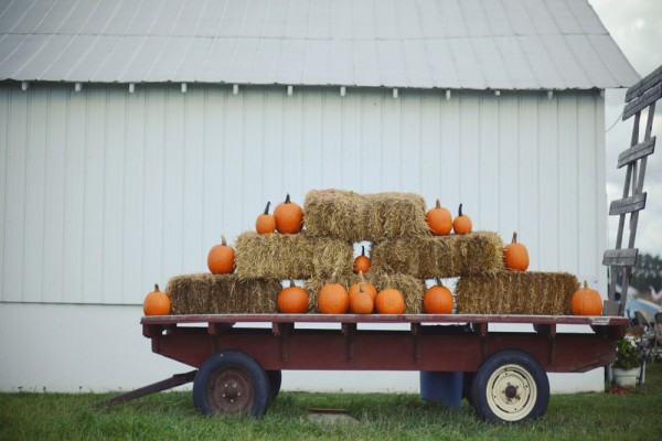 pumpkin hay megs country celebrations
